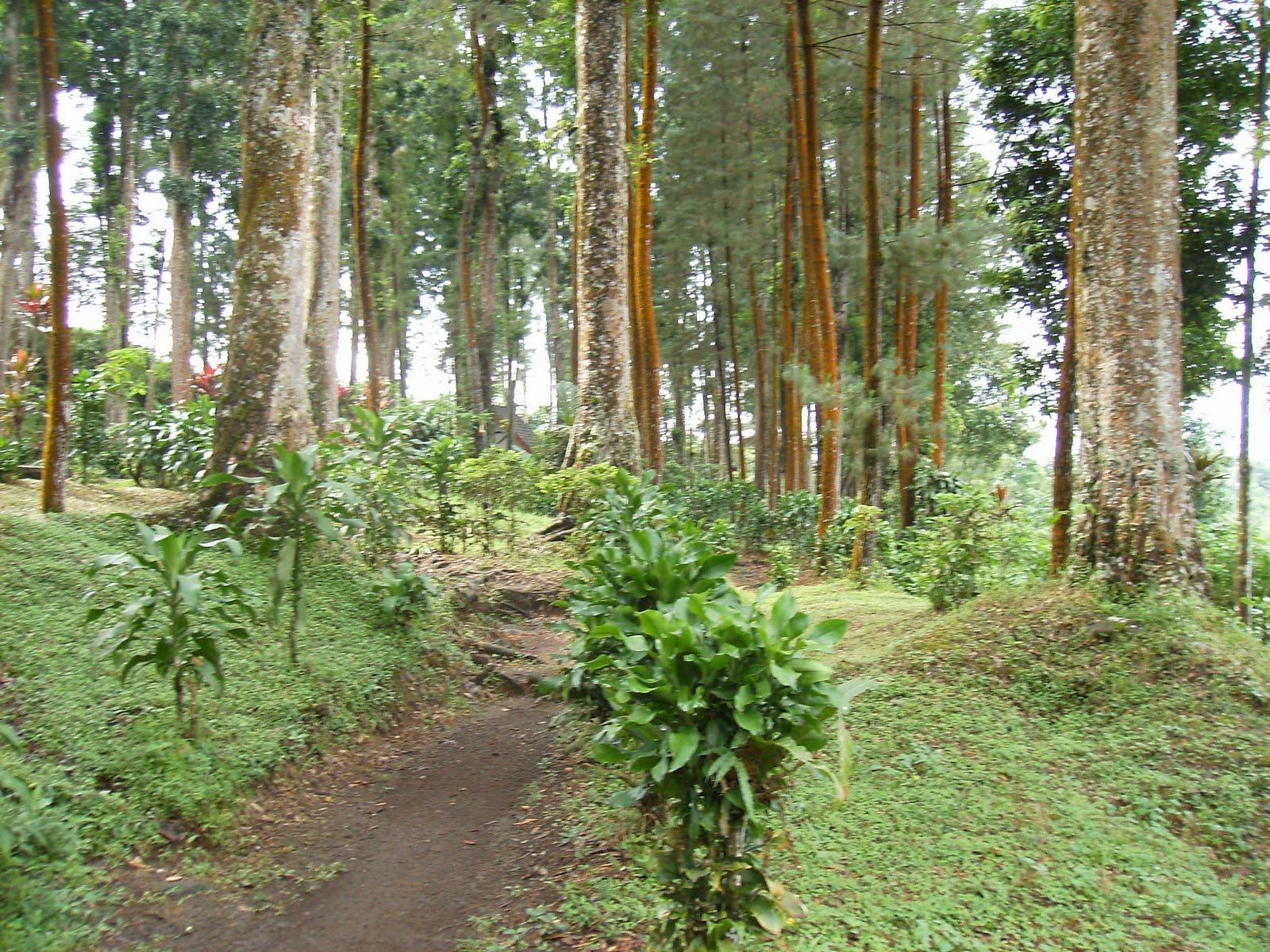 Objek Wisata Purwokerto Pariwisata Indonesia