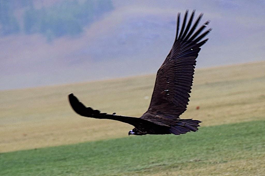 Tierreiche mongolei