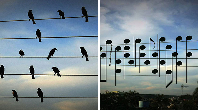 Posiciones de ave en los cables eléctricos se vuelven en fascinante melodía