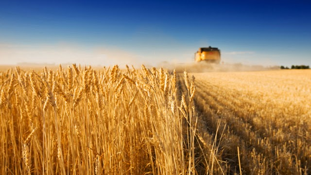http://www.independent.ie/business/farming/european-wheat-prices-hold-firm-as-russia-hikes-excise-duties-30884100.html