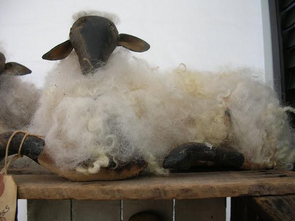 Angora Sheep