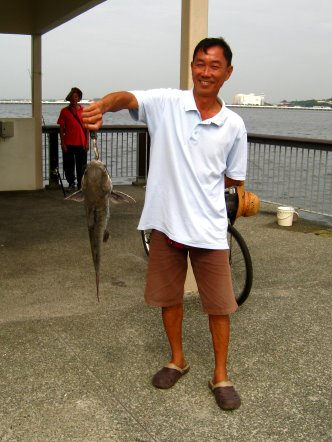 Big Catfish [Hexanematichthys], Seng Heurr 鲶鱼 [chinese] or Bulukang [malay] Caught by Ah Wong At Woodland Jetty