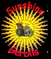 Sunshine Gerbils
