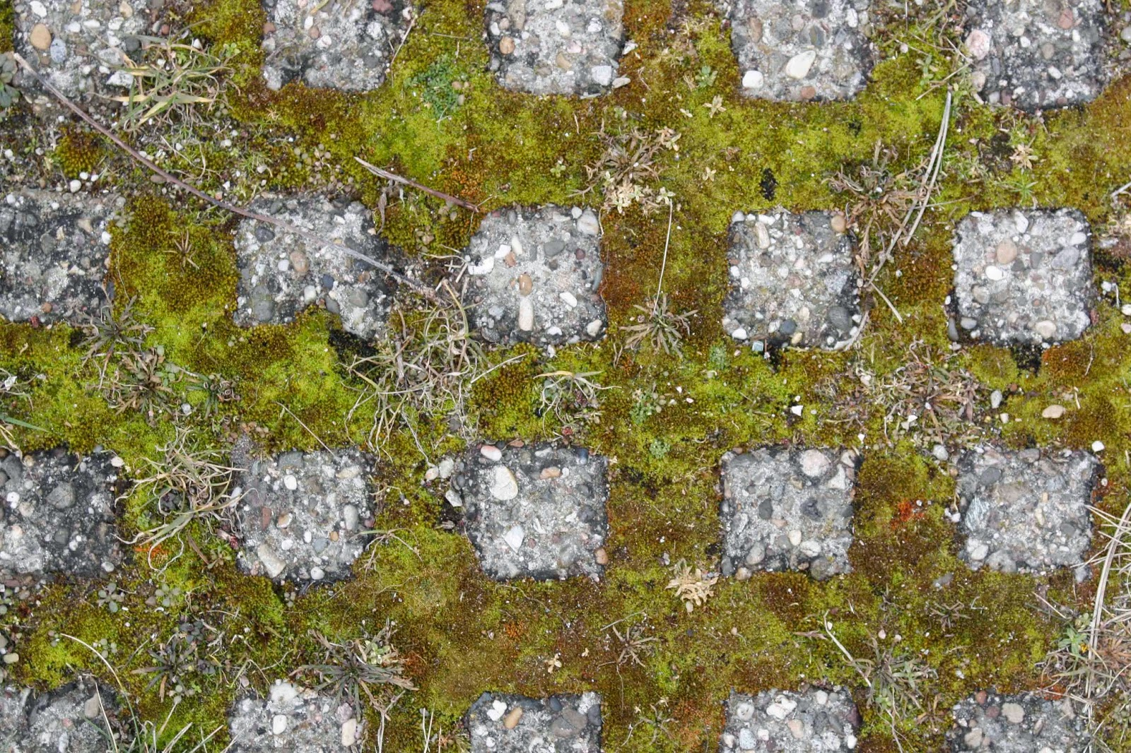 patterned moss in sidewalk