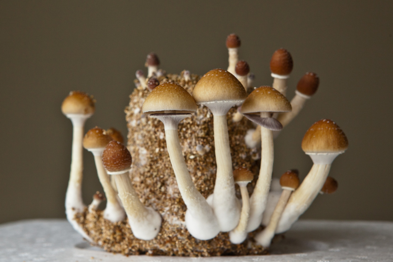 growing magic mushrooms