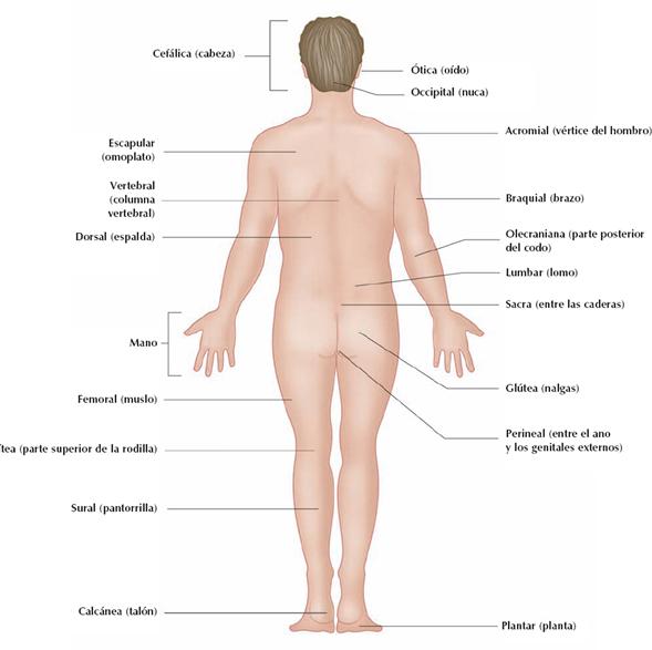 Fisiologia Clinica: Planimetría