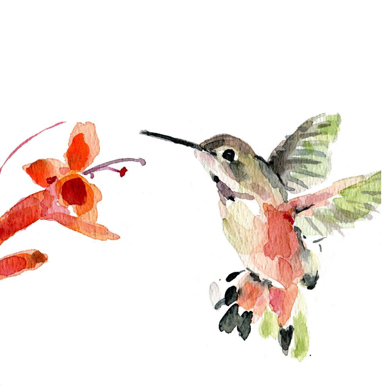 Bird In Everything Watercolor Bird Paintings