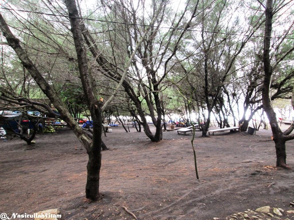 Pohon Cemara sepanjang pantai