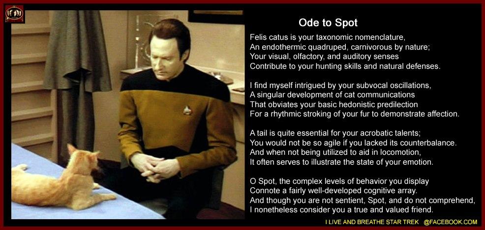 Data S Cat Spot Poem