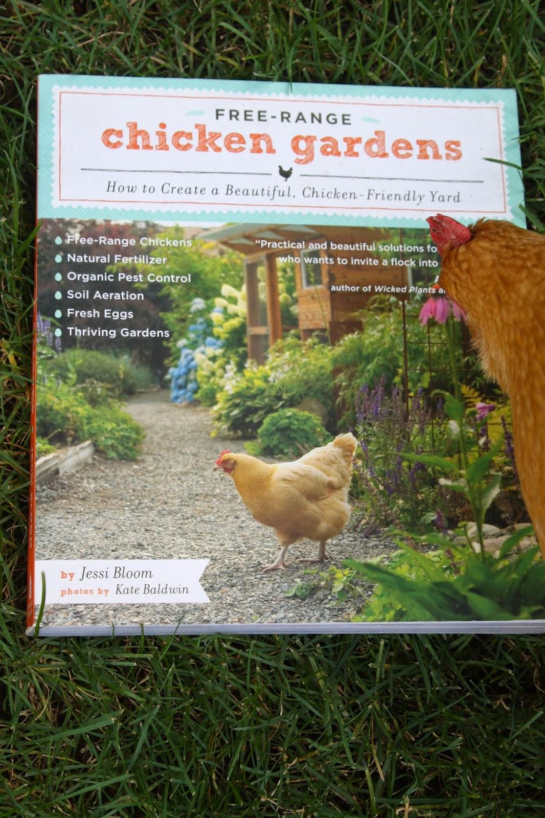 backyard evidence of free range chickens