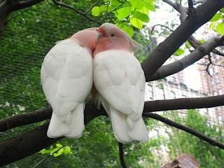 %D8%B7%D9%8A%D9%88%D8%B130 صور رمانسية طبيعية لأجمل الطيور 2014