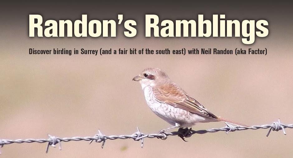 Randon's Ramblings