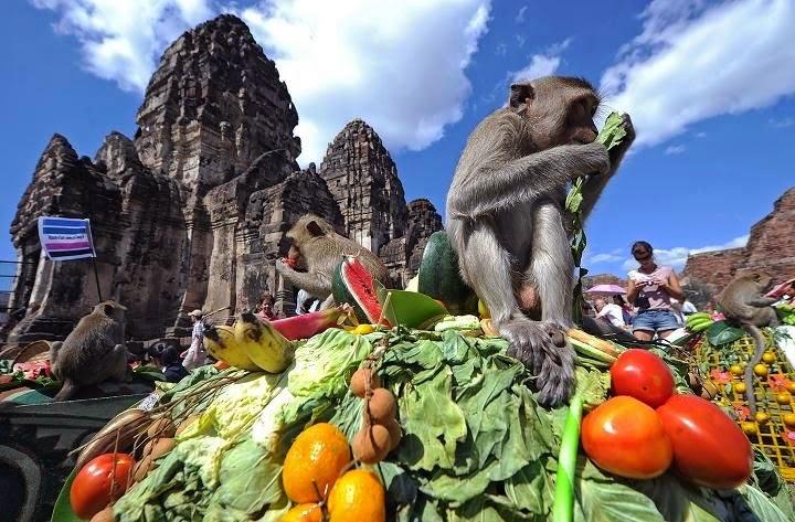 Affenfestival Lopburi Thailand