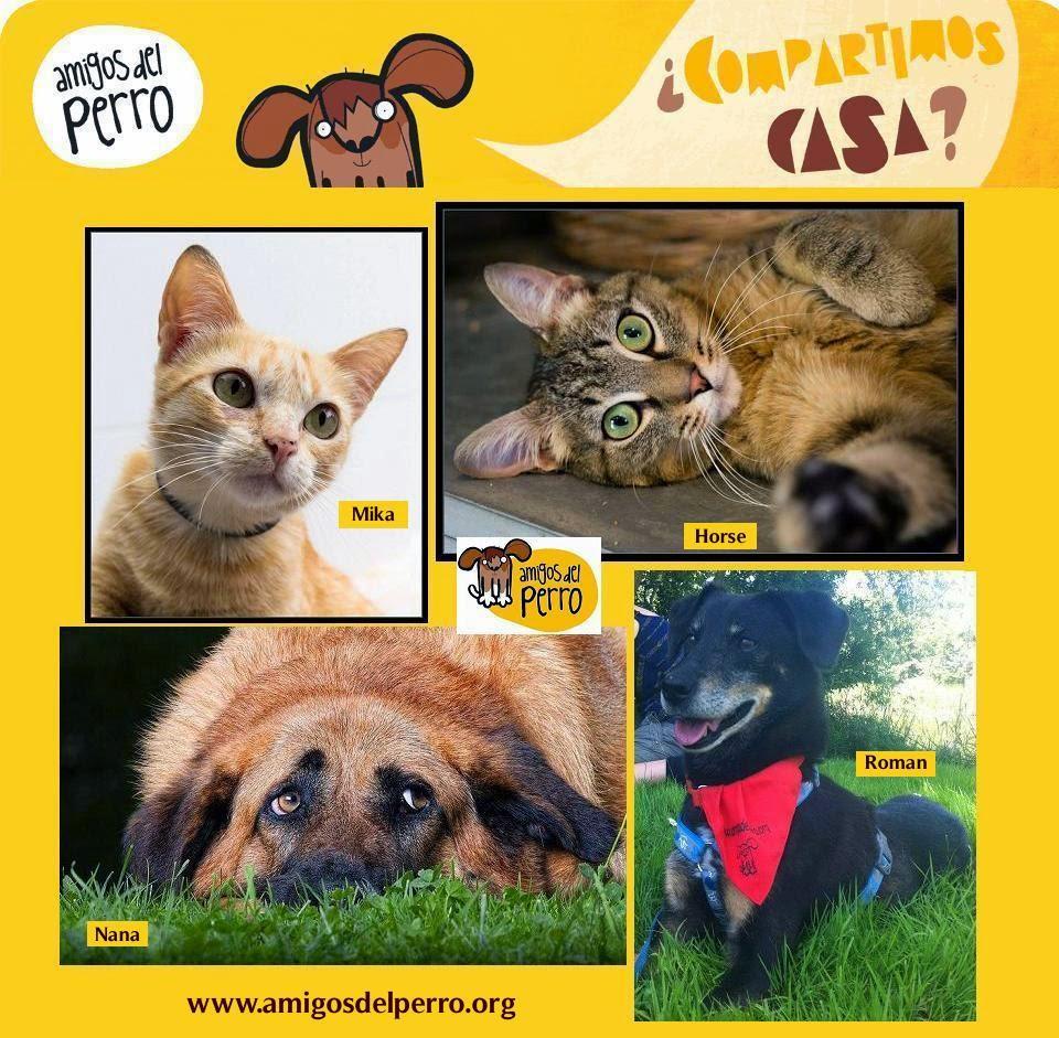 Adopta animales sin hogar