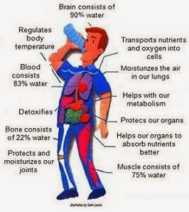 funcion agua cuerpo humano