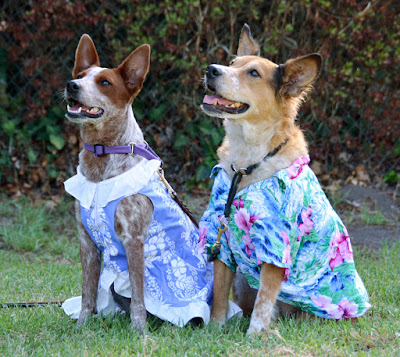 Tropical tourist dogs