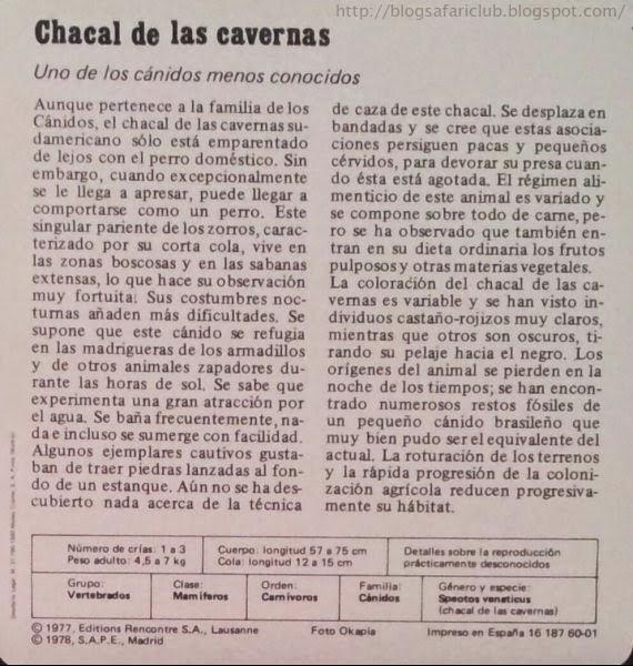 Blog Safari Club, características del Chacal de las cavernas