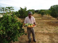 Frutas produzidas com água de cisterna