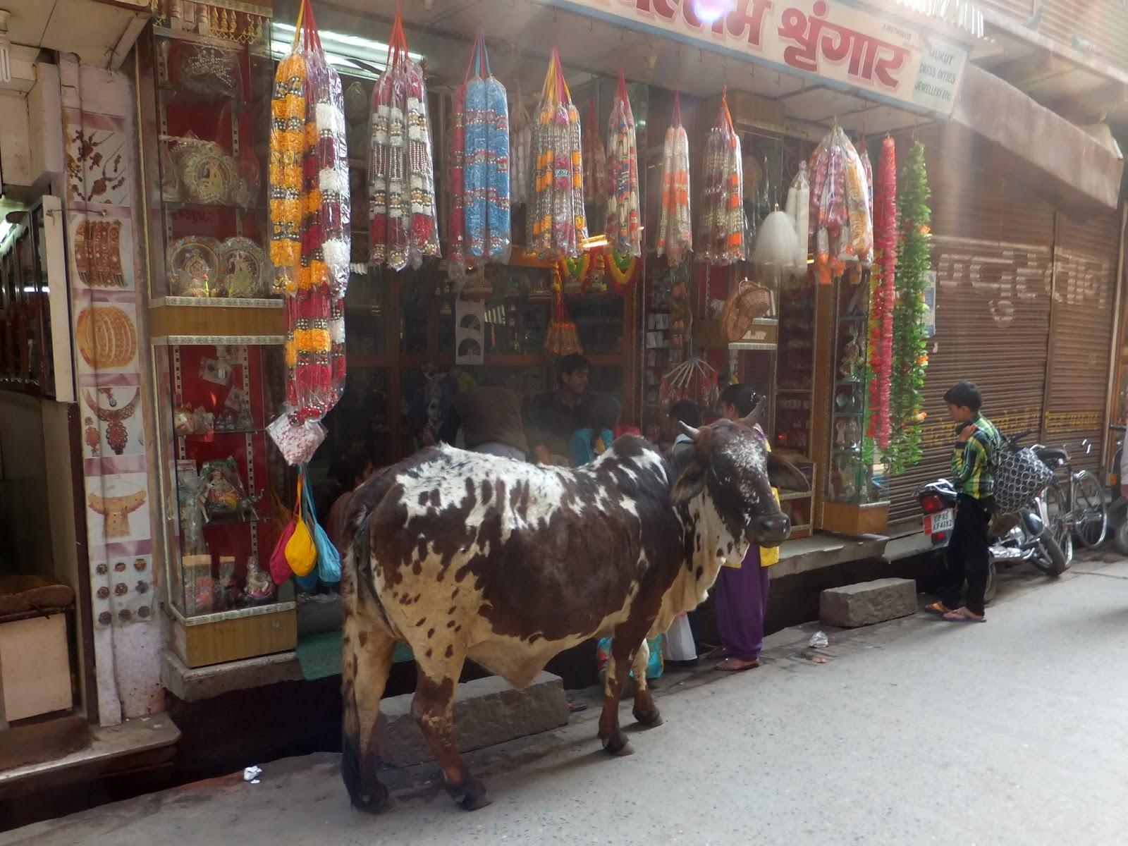 корова у торговой лавки