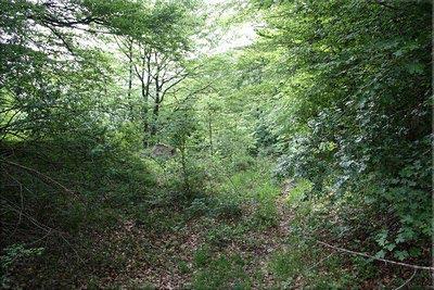 Pista casi oculta por la vegetación