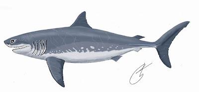 tiburones del cretaceo Cretoxyrhina