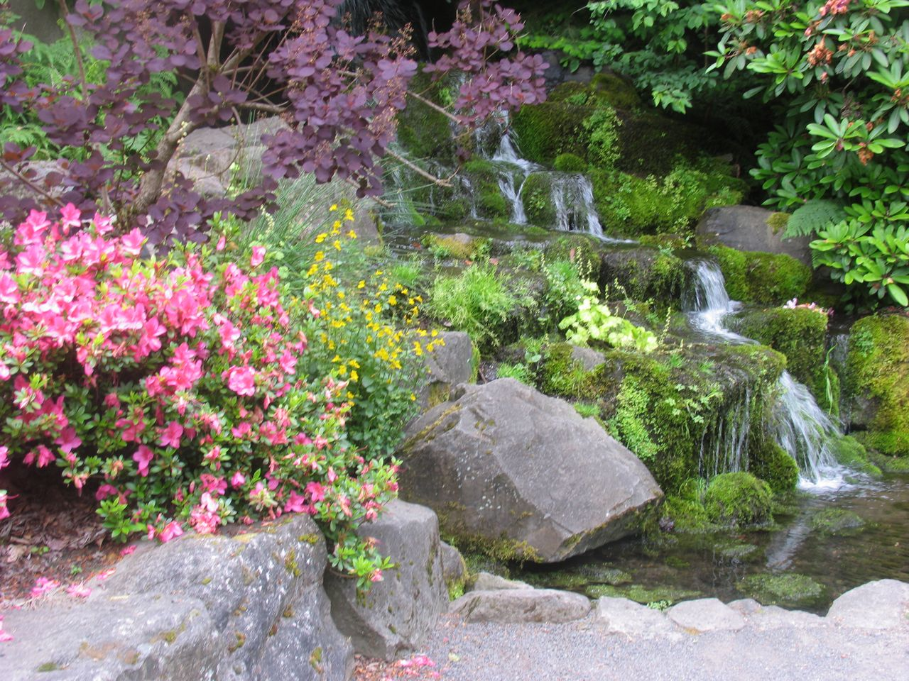 Images From Crystal Springs Rhododendron Garden Author Paul Gerald