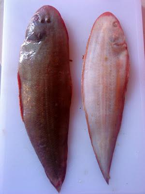 Ikan Sebelah Laut atau juga dikenali sebagai ikan sisa Nabi , nama