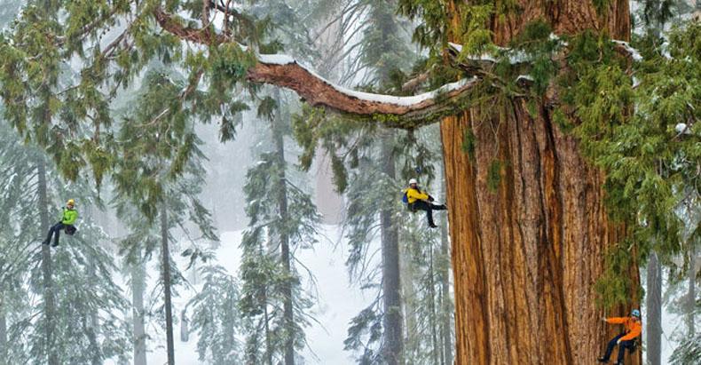Gigantesco árbol de 3200 años capturado en una sola imagen