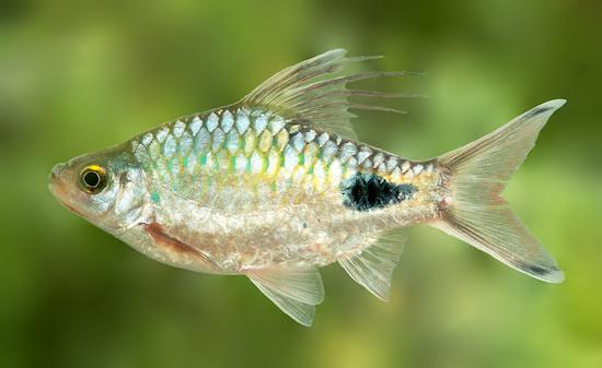 10 especies de animales con nombre de celebridades | Rincón Abstracto