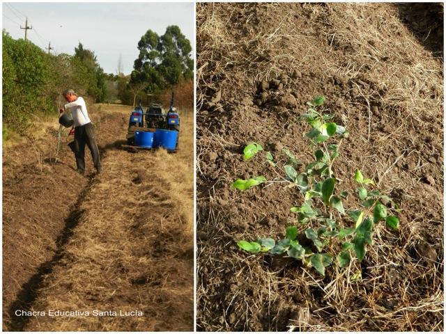 Regando los árboles recién trasplantados - Chacra Educativa Santa Lucía