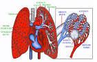 Suplemen untuk Penderita Asma