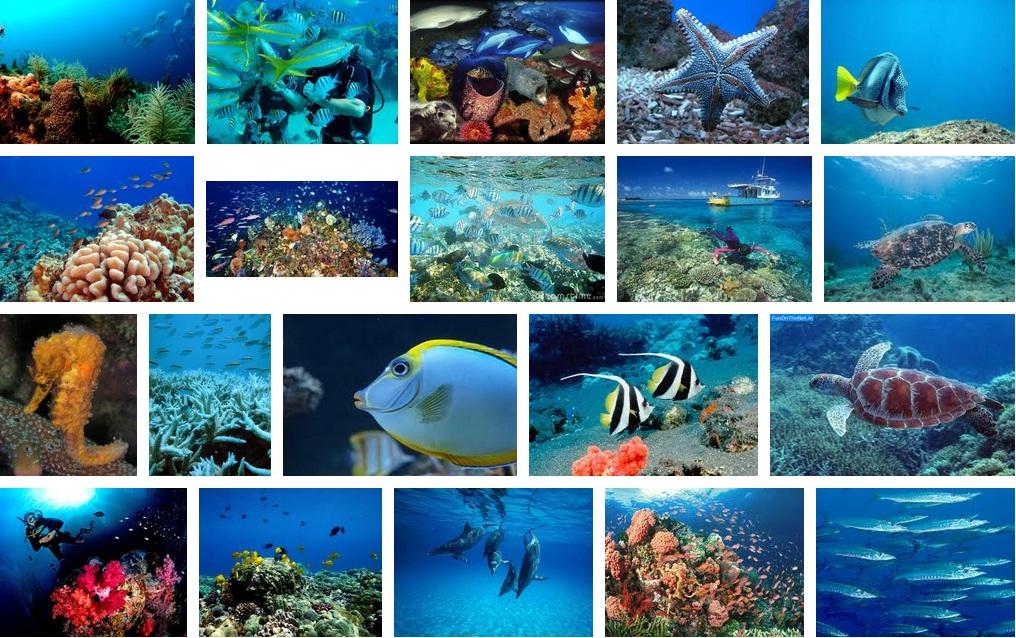 Indahnya Dunia Sains Teknologi Keindahan Hidupan Di Laut