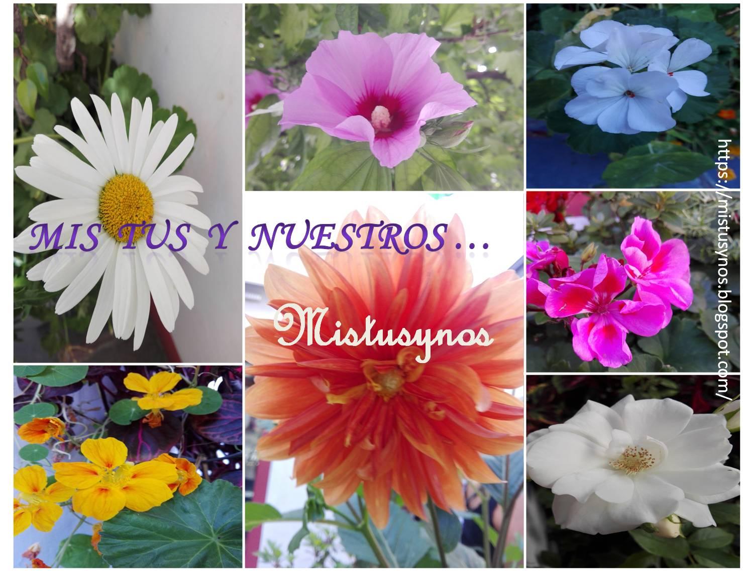 Mistusynos... Mis, tus y nuestros
