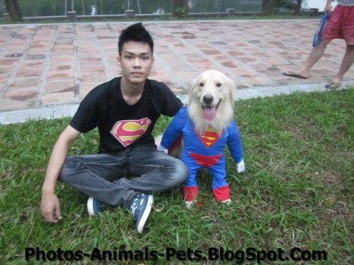 http://1.bp.blogspot.com/-9_yIaI8i9Uo/TxGqOfeU5tI/AAAAAAAACqg/ZjdirnvNCGk/s1600/Fun%2Bpictures%2Bof%2Bdogs%2B%25282%2529.jpg