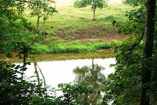 Parres, Camín de la reina, vista del río Piloña