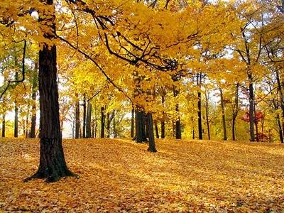 Autumn Bones2