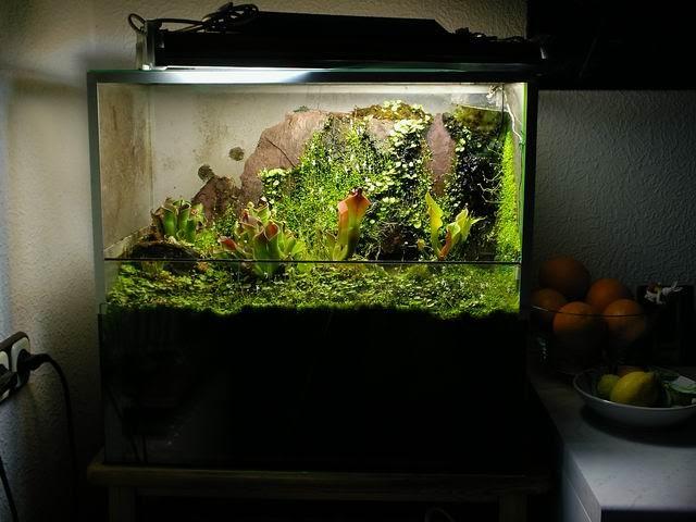 10 gallon fish tank terrarium - 10 gallon terrarium ... 10 Gallon Paludarium
