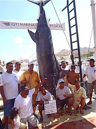 Land  Fish on Monster Blue Marlin Caught After 28 Hour Battle Off Cabo San Lucas