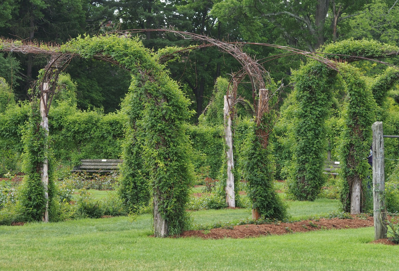 Rose Garden Arches, Elizabeth Park, Hartford, CT 2014 #rosegarden