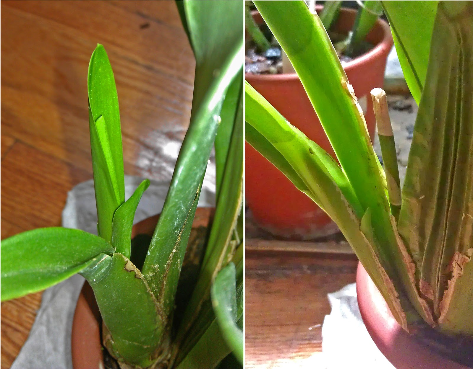 how to look after an orchid plant