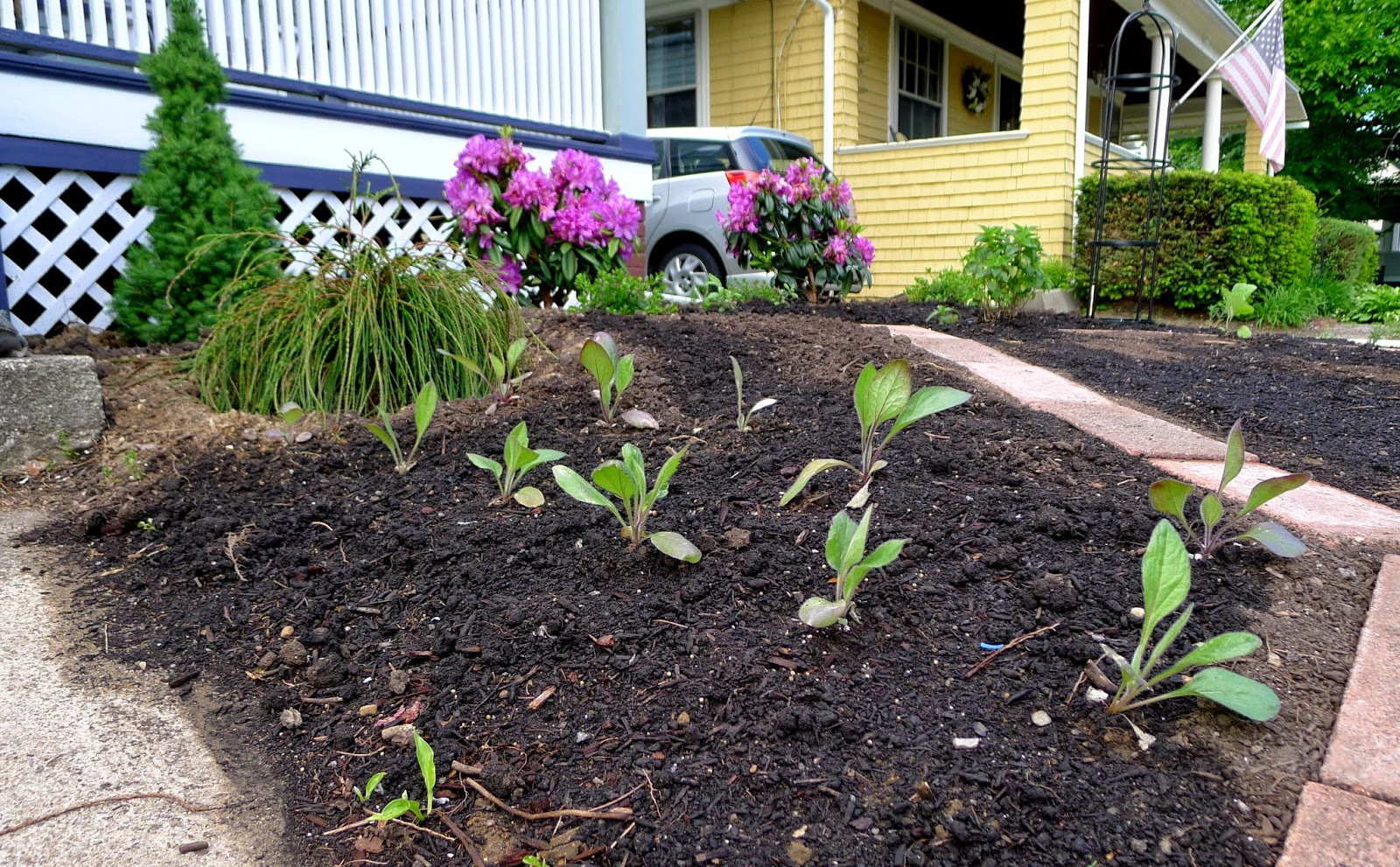 Black-Eyed Susans, soil erosion, edible landscaping