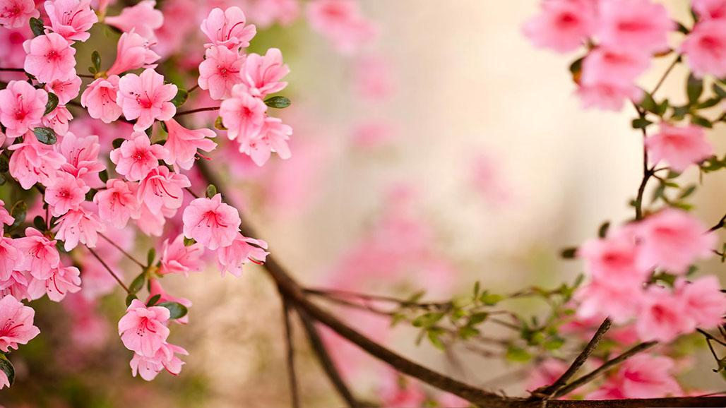 flowers wallpaper hd for desktop free download full screen  full, Beautiful flower