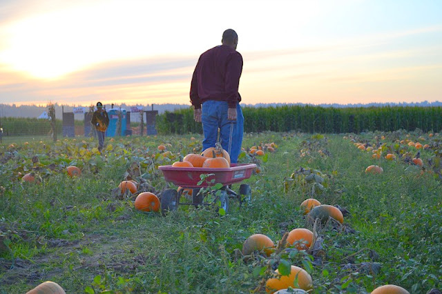11 fall activities to check out in Seattle; Stocker Farms