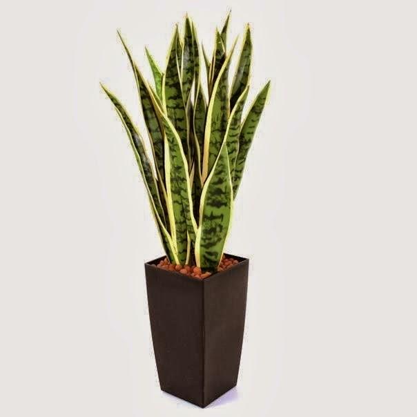 bol oksijen üreten bitkiler, evde bol oksijen yaratmak, oksijen yaratmak