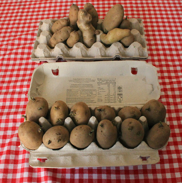 potatoes in egg cartons
