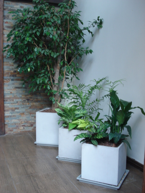 Reverdir jardineria y paisajismo plantas de interior for Plantas paisajismo