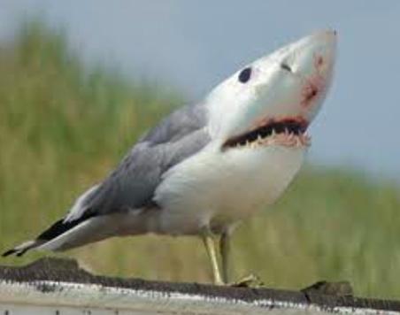 SEAGULL-SHARK   former empire   Flickr
