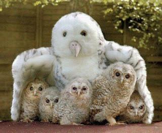 kumpulan binatang lucu
