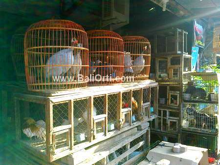 Dird for sale, Satria Bird Market Denpasar