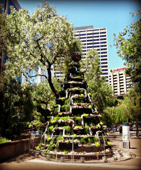 vanocni strom u opery v Sydney